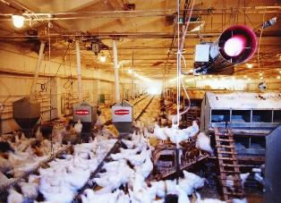 Бизнес идеи птицефабрика малозатратные идеи для бизнеса