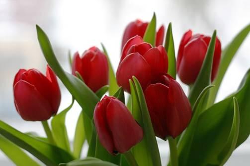 zvety