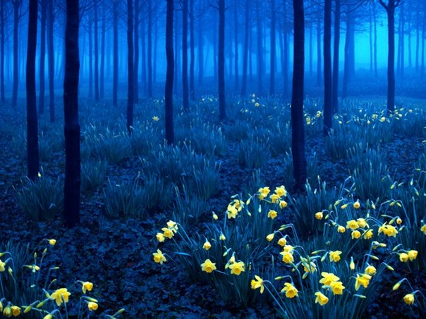 Германия. Черный лес